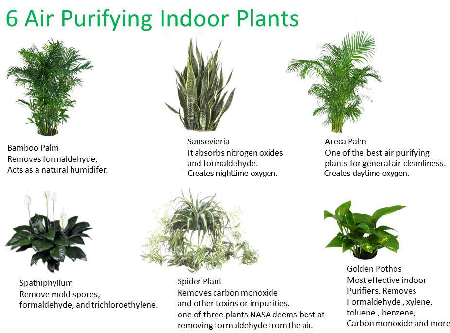 Nasa houseplants clean air - Good household plants ...